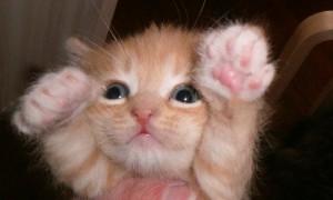 золотой котёнок