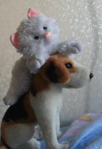 Собака Анита помогает котёнку